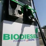 biodiz